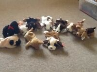 Set of 10 Ty beanie dogs. Never played with and in excellent condition.
