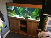 4ft Aqua One fish tank