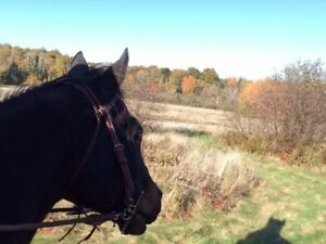 Looking For My Next Project Horse!