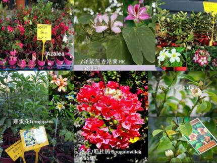 Flower plants for sale from $6 Jandabup Wanneroo Area Preview