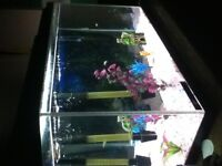 Fish tank with fish and every thing els
