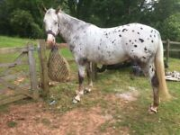WANTED! Stable or livery