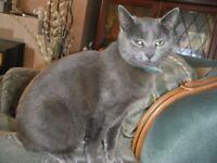 Lovable feline needs a new home!