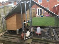 4 chickens, chicken coop and enclosure, water, food & oyster shell dispenser
