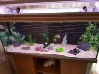 Large complete 4 foot tropical fish set up
