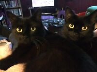 3 Beautiful Cats For Rehome