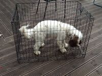 Dog Cage Pratically New £10