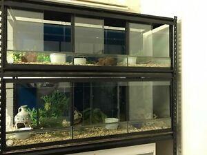 Reptile tanks Torrington Toowoomba City Preview