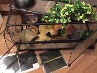 3ft glass vivarium and more