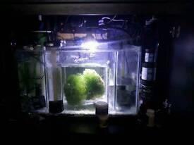 Fish tank sump