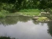 Free home for pond fish