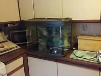 2ft 64 litre fish tank