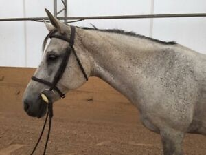Have you seen this mare?
