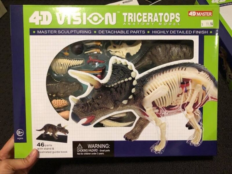4d anatomy model triceratops / dinosaur | Toys - Indoor | Gumtree ...