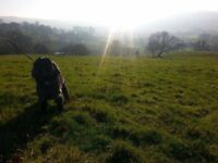 Dog Walking/Pop-In Service for pets - Nottingham City Centre