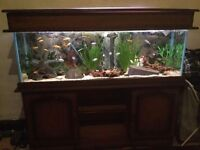 4ft fish tank with stand and lid