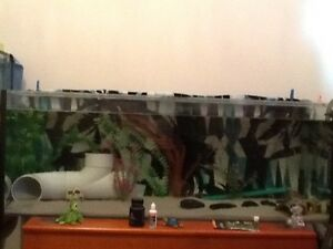 Axolotl, Tank, Cannister Filter and all accessories Toowoomba Toowoomba City Preview