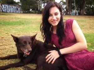 Dog walker/sitter for $20/hr! Ashfield Ashfield Area Preview