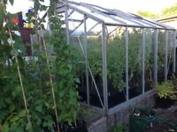 Greenhouse 10ft x 8ft (no glass). Over 30 years old, super strong frame.