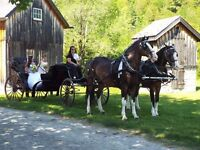 Horse Drawn Carriage Available for Weddings,Graduation or Events
