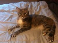 FREE!! Amazing cat needs a good loveable home