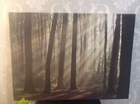 Large Canvas Woodland Scene Picture
