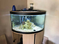 Large Aquarium Fish Tank plus many extras