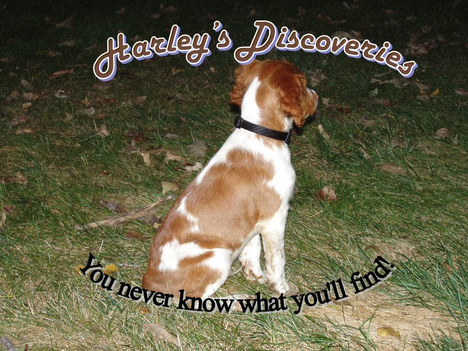 Harley's Discoveries