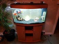 Fish (oscar, parrot and pleco) and tank