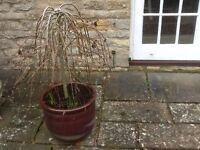 Glazed patio planter