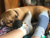 3/4 pug puppy jug puppy
