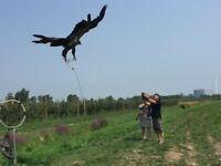 Falconry workshops