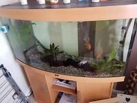 Fish tank (4ft) with stand and accessories