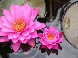 Chinese Wellness Full Body Massage Centre