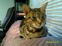 5 yrs old female neutered cat