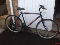 adult and child bike for sale