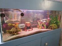 3 ft fish tank and stand