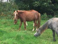 Roxy & Ronnie Project Ponies