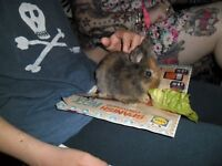 Baby rabbits for sale - £10.00 each