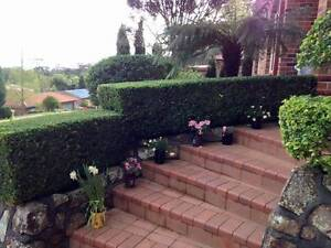Hunter Gardenscapes Warners Bay Lake Macquarie Area Preview