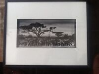 Photography. African Safari. 2 original black & white photography by Laurent Bahelix