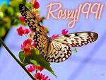 Rosxsy1991