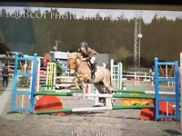 Smashing Jumping pony for sale £1800