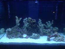 Aqua one fish tank. Marine tank. Gosnells Area Preview