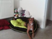 large dog bed very good condition easy to keep clean