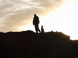 ANDY'S DOG WALKS: ensuring peace of mind for yourself and a happy and well exercised pet.