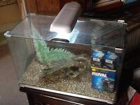 2 Ft aquarium fish tank with filter, decor and light £45