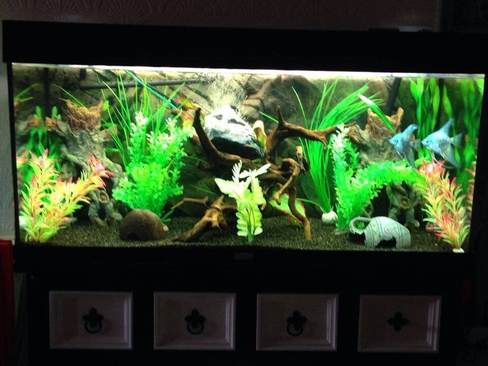 juwel rio 180 black fish tankaquariumjewelin Sheffield, South YorkshireGumtree - juwel rio 180litre fish tank black, comes with juwel lights, juwel filter n heater, long airline, pump, large air stone, gravel, background, few small ornaments, few plants, NO STAND COLLECTION ONLY