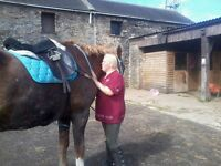 ENGLISH LEATHER GP SADDLE REDUCED FOR QUICK SALE