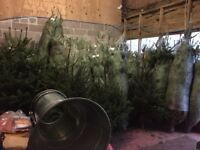 Christmas Tree Netter and Spare Netting